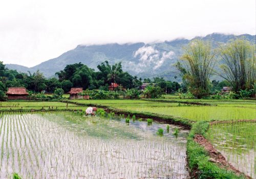 Feel the Tranquil Mai Chau 2 days