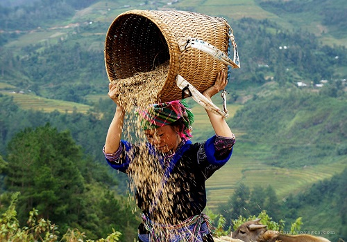 Taste the Beauty of Sapa 3 days