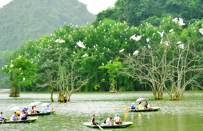 Tourists are excited with many birds in Thung Nham bird garden