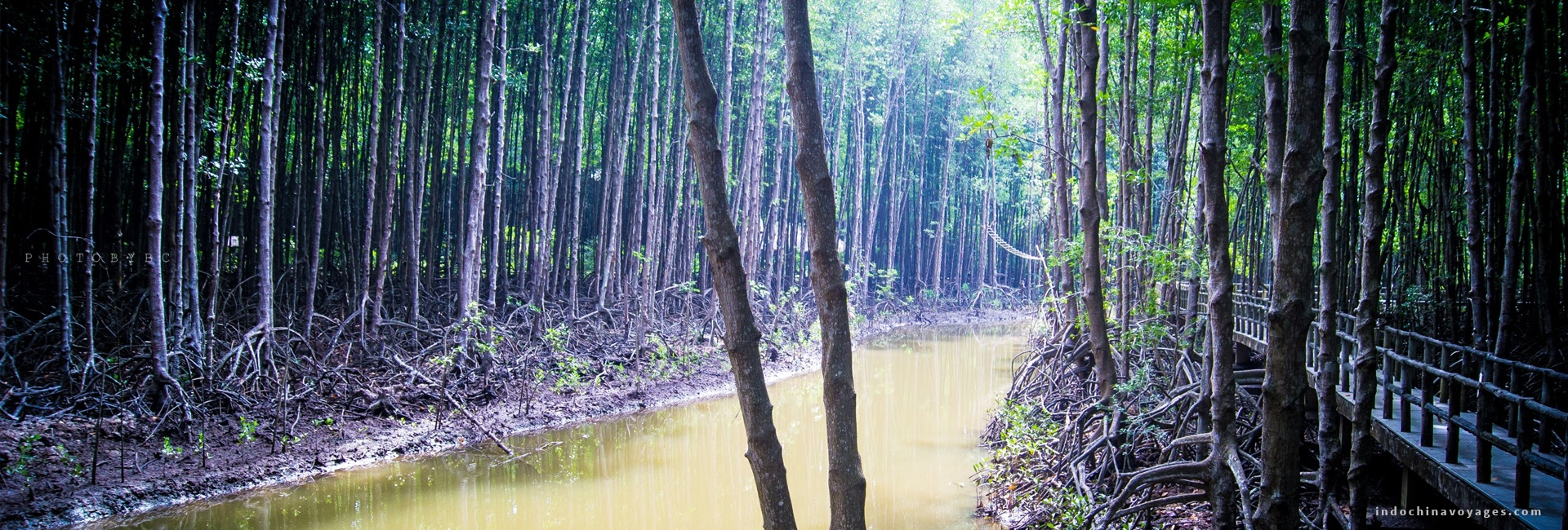 Can Gio Mangrove Forest Discover