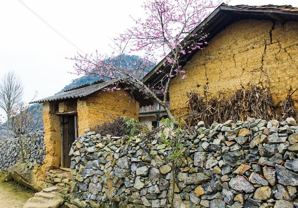 Homie hostel