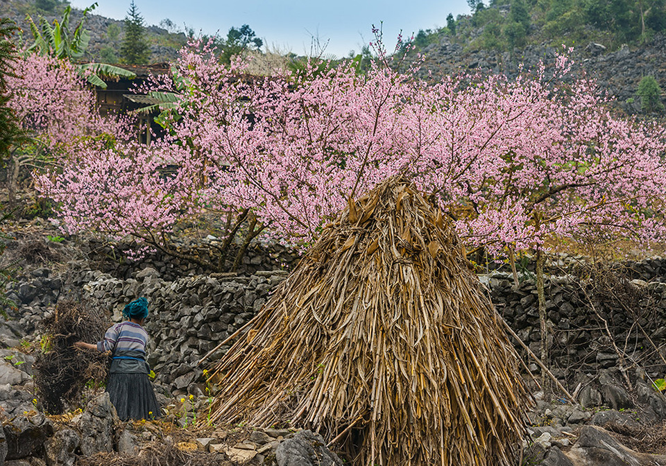 Ha Giang in spring