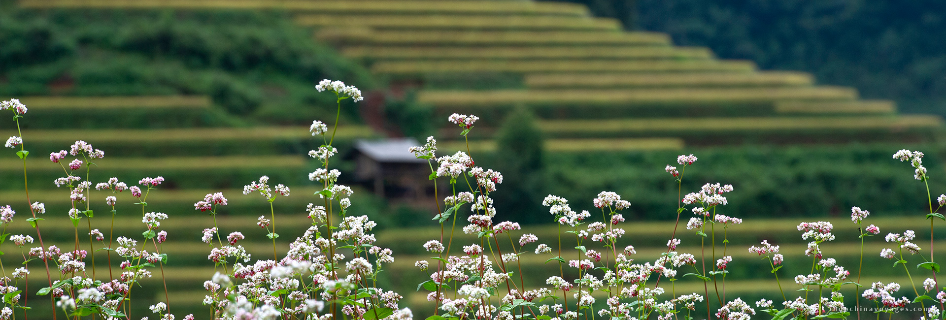 Ha Giang weather – Best time to visit Ha Giang