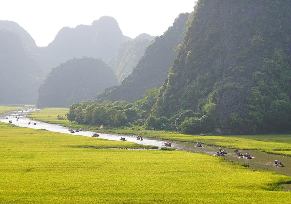Golden season in Ninh Binh